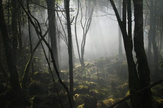 0529-樹海実景霧-_MG_0347