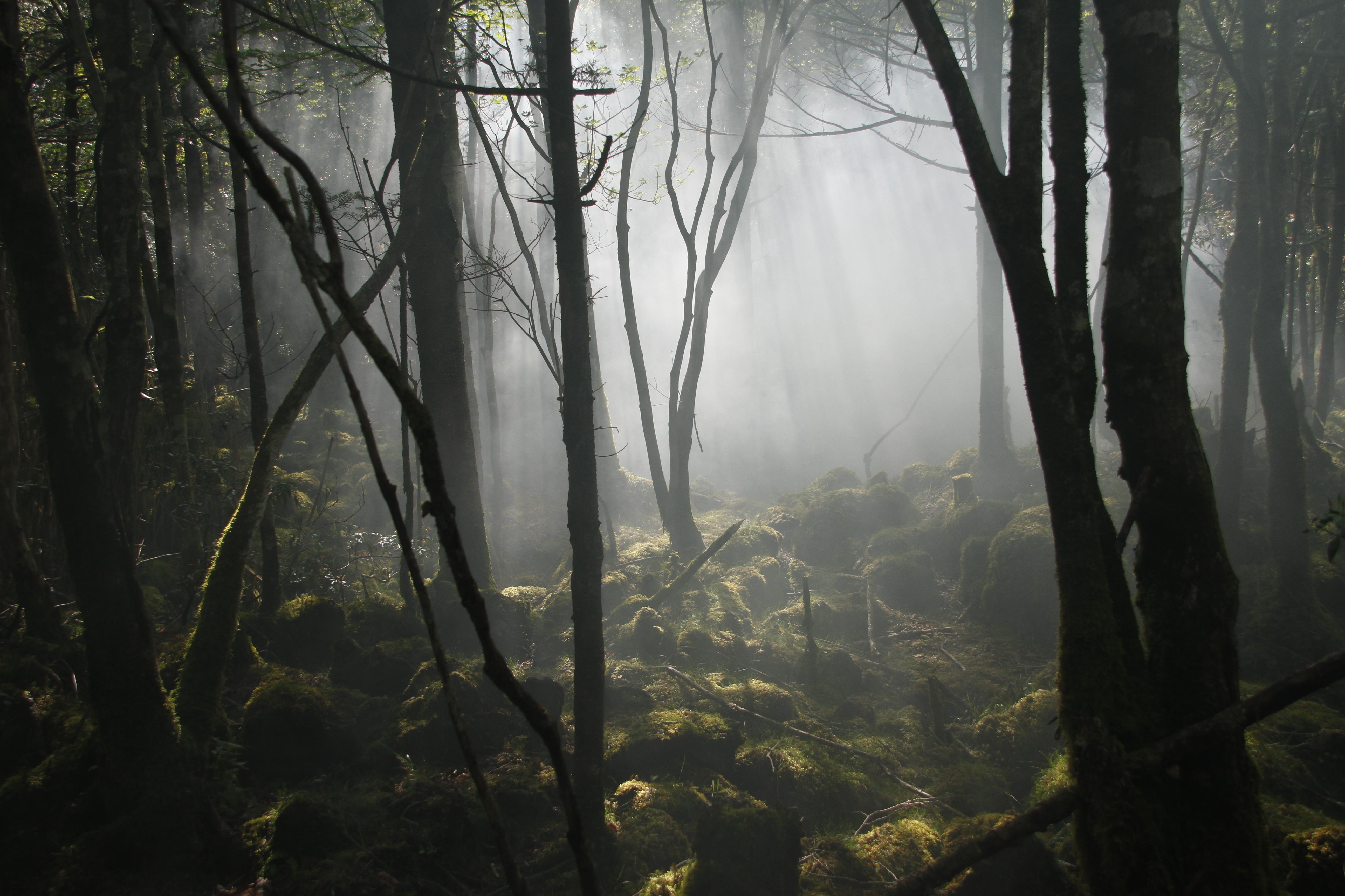 5.青木ヶ原樹海 : 【※閲覧注意】...